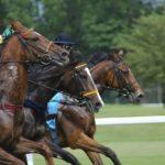 競馬はコースの特徴で攻略法が変わる!その極意とは?
