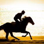 競馬で芸能人の馬主と言えば? 馬に投資する有名人たち!