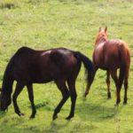 オークスの傾向とは? 歴代の血統や産駒・騎手を紹介!