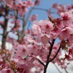 桜花賞の過去の結果! 10年分のデータを紹介