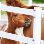 ヨハネスブルグとは? 種牡馬の種付け料や産駒・血統を紹介!