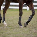 競走馬の輸送車が事故! 馬への補償はいくらになるの?