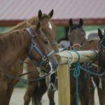 栗東のトレセン見学! レースに出場する馬を身近で見れるの?