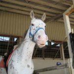 馬の色の種類!8つの毛色の分類&特徴をご紹介!
