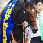神戸新聞杯とは? 傾向&歴代レースの脚質・血統を紹介!
