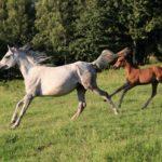 放牧することの意味!  競走馬にどんな効果があるの?
